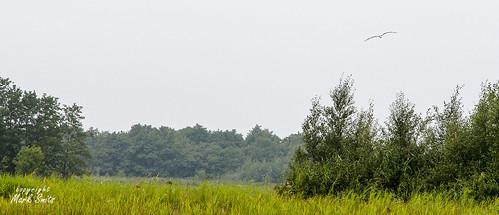 NL - Giethoorn - Weerribben - Ooievaar
