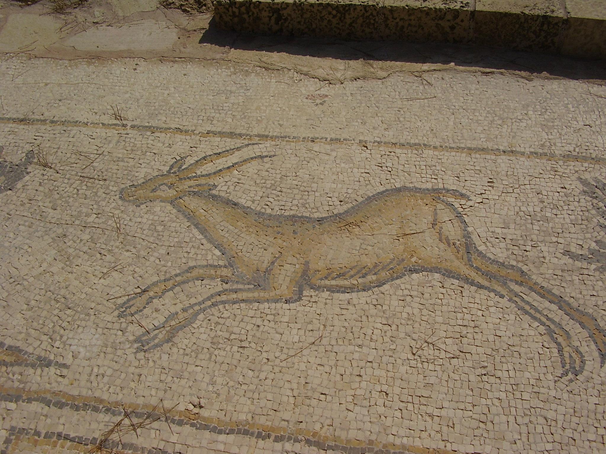 Mosaic of a gazelle (Byzanthic period), Ceasarea, Israel Photo taken by Avishai Teicher on October 20, 2007.
