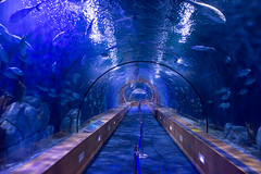 Inside de fish tunnel.