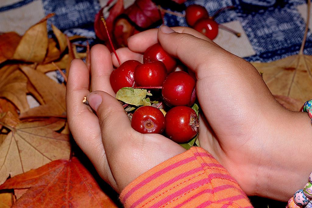 manzanas ornamentales