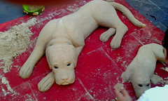 Sand dog in Naples