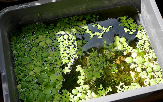 1920x1200 Mini Pond 20180831