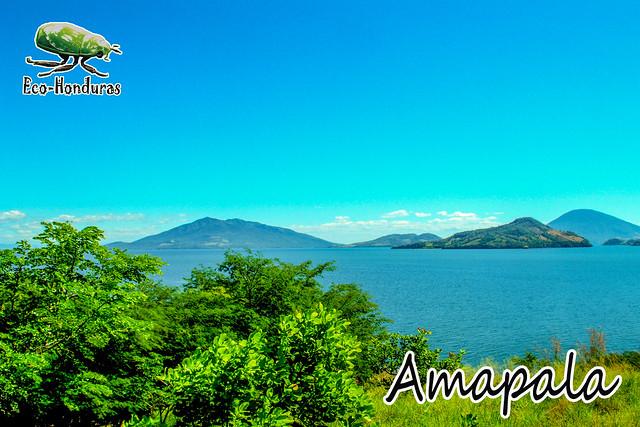 AMAPA7