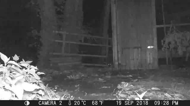Night shift at the running duck- aviary
