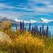 Mt Cook Flowers NZ by Wisconsin Fox