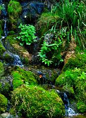Parc Floral  Jean Pierre Lanson - Photo of Aussac-Vadalle