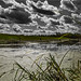 of swamps and men by josef...