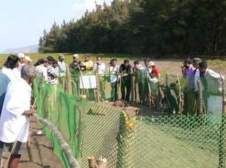 महाराष्ट्र के रत्नागिरी जिले में संरक्षित समुद्री कछुओं के घोसलें (संगठन-सहयाद्री निसर्ग मित्र)