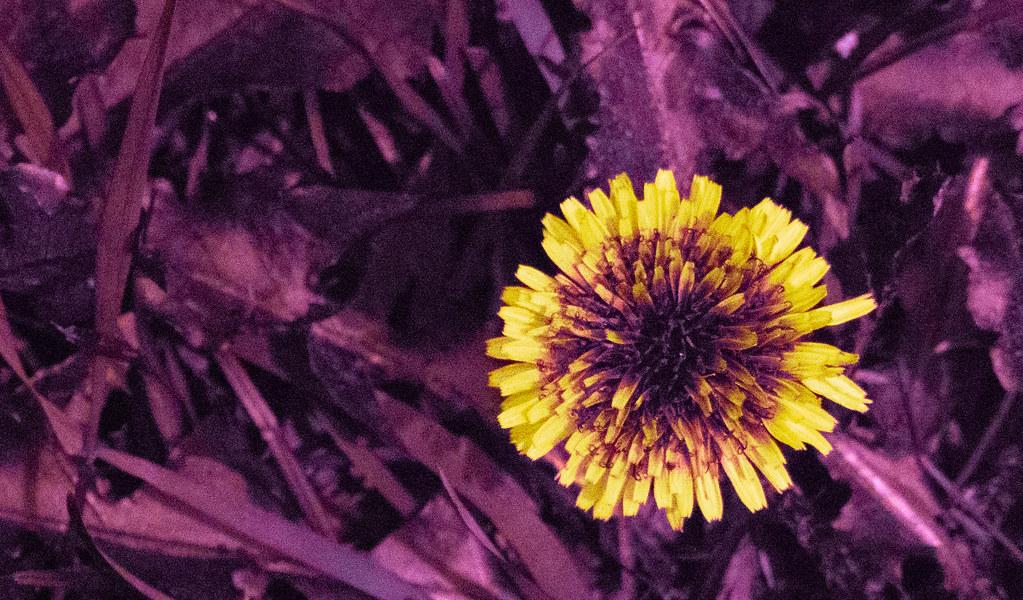 UV Plant_3