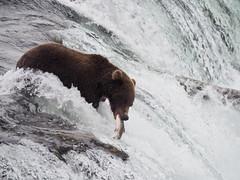 Alaska_BrooksFalls_20180824-152934_PALE7468#
