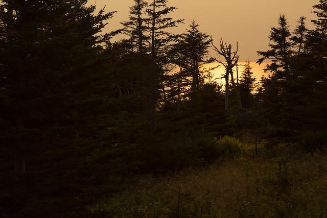 Light Through the Coastal Forest