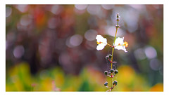 Wetland Flora