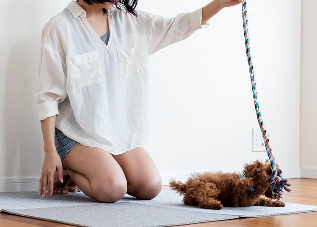 イタズラ対策として飼い主さん一緒に遊ぶ犬