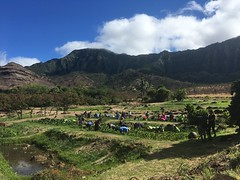 Hawaiian Electric at Trust for Public Land's Kaala Farms Work Day – August 18, 2018: Many hands make light work!