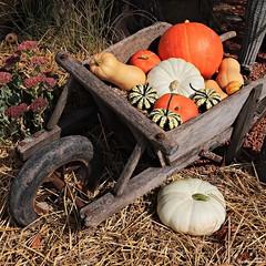 légumes d'automne.