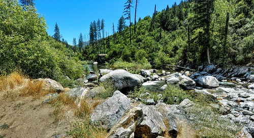 joelach americanriver theamericanriver stream creek forest pinetrees rocks tahoenationalforest sierranevada