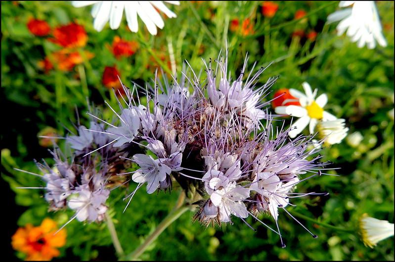 Касарги 8682 Flores