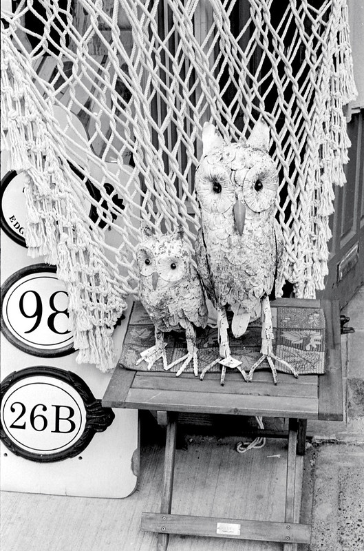 Owls for Sale