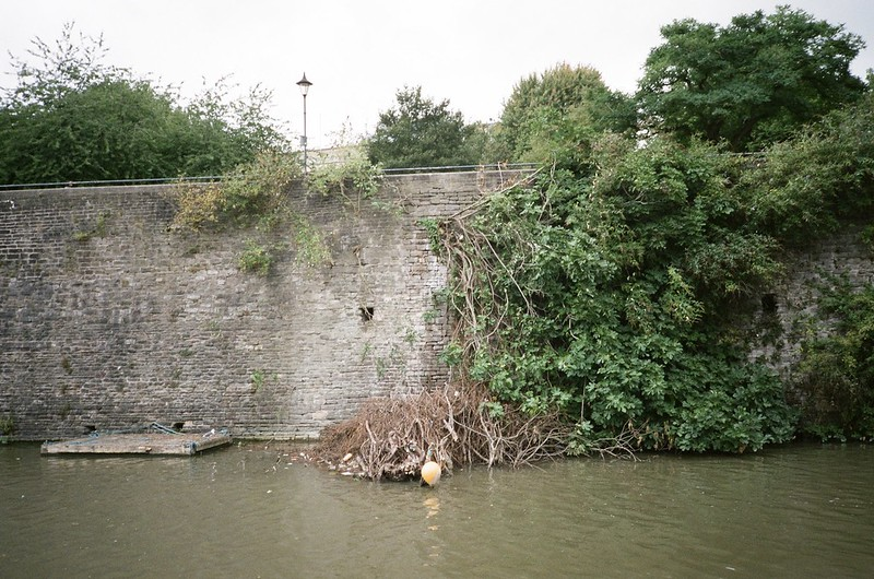 The remains of the Castle Park fig