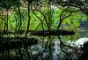 hutan mangrove 2