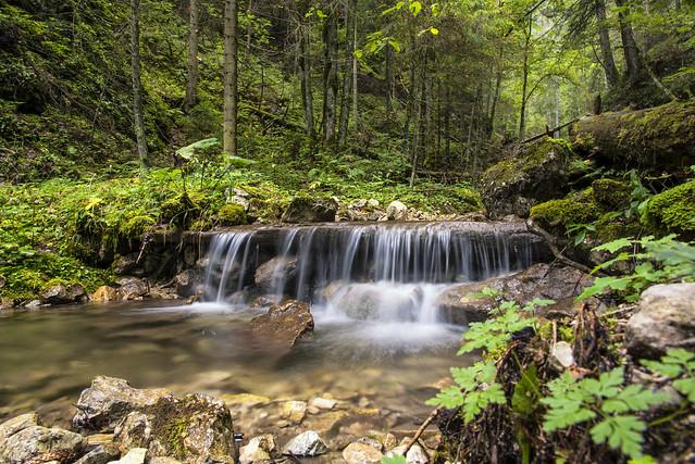 Deep in the forest, Nikon D750, AF-S Nikkor 24-120mm f/4G ED VR