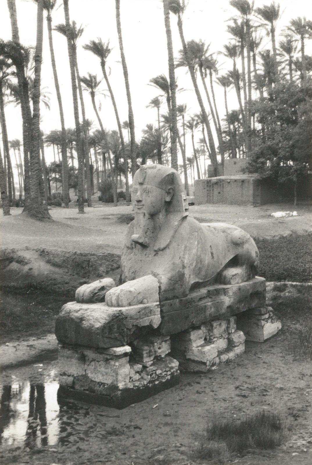 Мемфис. Алебастровый сфинкс на месте храма Птаха