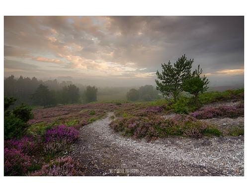 Misty Pathways.