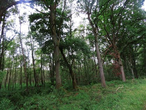 20180624 20 189 Baltica Wald Baum