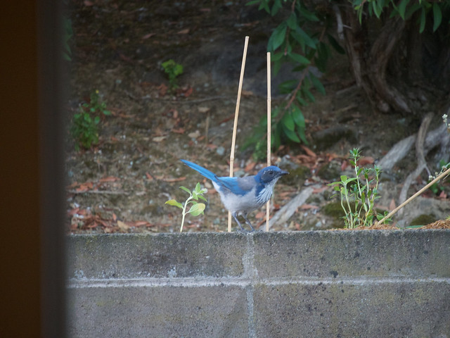 Birding 20180829, Olympus E-PL8, LUMIX G VARIO 45-150/F4.0-5.6