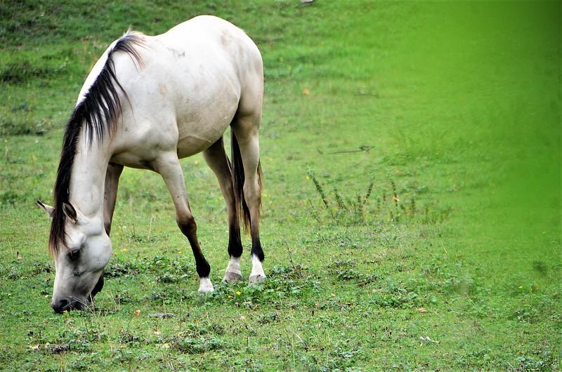 Horse 02.08 (6)