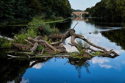 durham countydurham england gb riverwear river waterway water trees bridge flotsam debis framwellgatebridge reflections