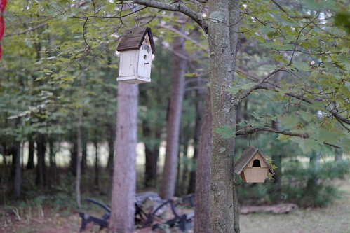 Home in White Creek - bird houses.
