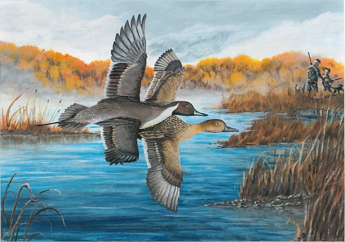 2018 Federal Duck Stamp Contest Entry 005