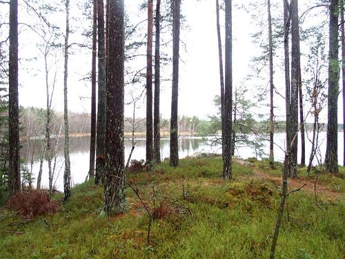 SÖ E54 Gisesjön1