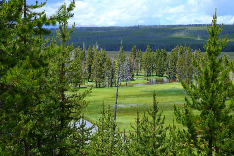 IMG_8915 Gibbon Meadows, Yellowstone National Park