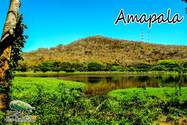 AMAPA31