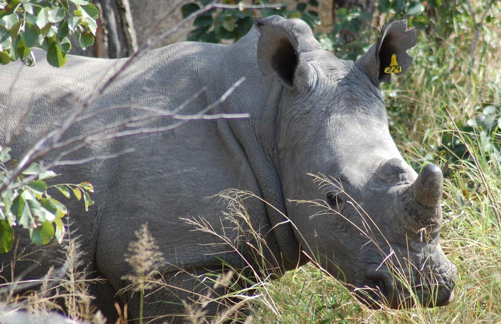 rhino-matopos-park