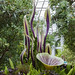 Glass flower sculpture - Phipps Conservatory