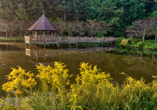 flower meadowlark virginia landscape summer sunrise water