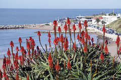 Bahía Varese