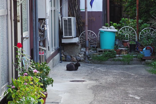 Today's Cat@2018-09-19