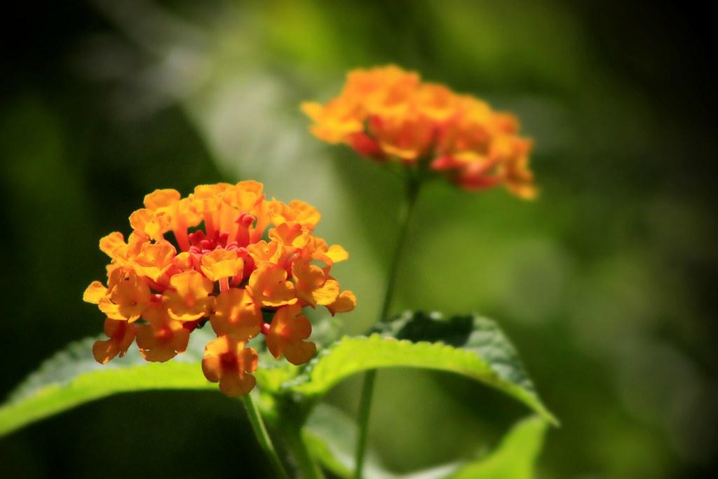 Midsummer Flowers David Russell Flickr