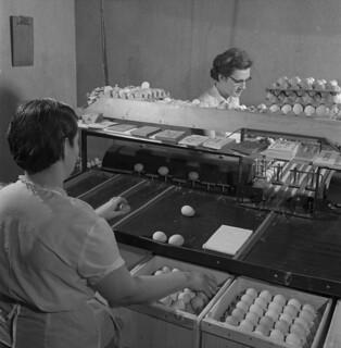 Ms. Hines and Ms. Dominey preparing eggs for consumers, Port Williams, Nova Scotia / Mme Hines et Mme Dominey préparant des œufs pour les consommateurs, Port Williams (Nouvelle-Écosse)