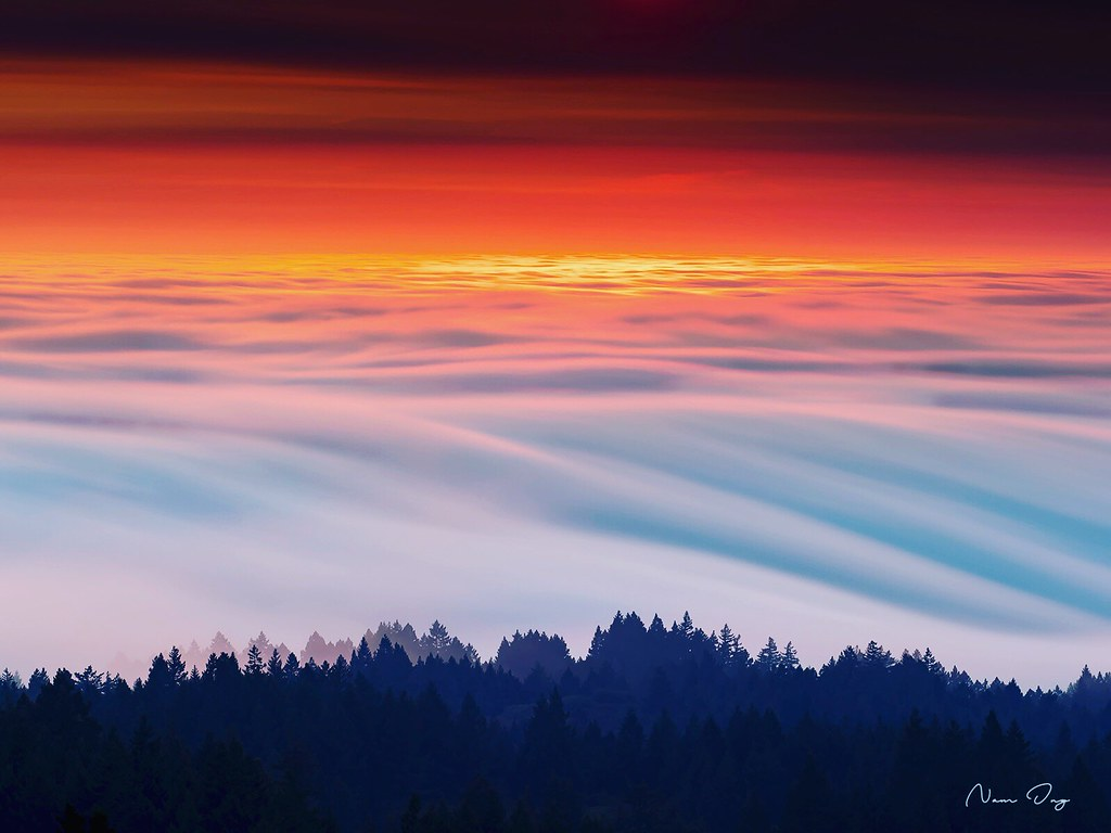 Le brouillard 43592821534_4e27694652_b