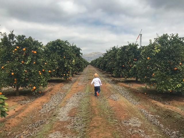Fresno Blossom 2018