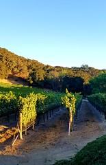 Cima Vines 2