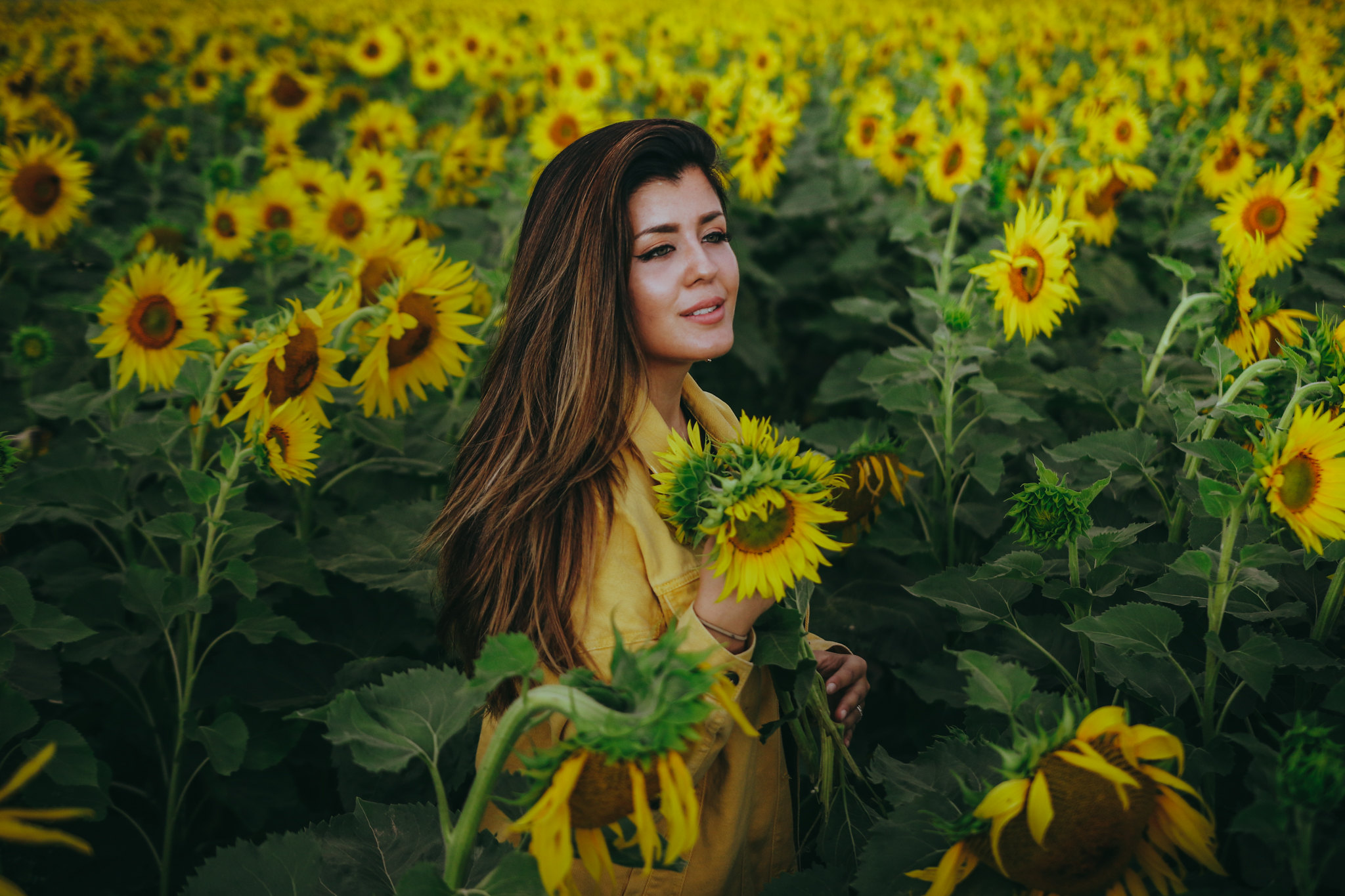 auringonkukkia-23