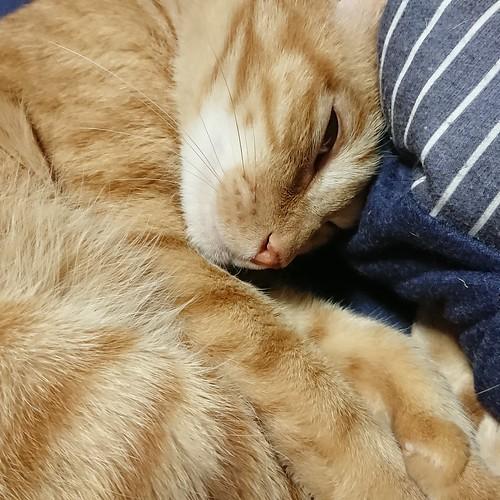目を開て寝ているよ。怖い、怖い by Chinobu