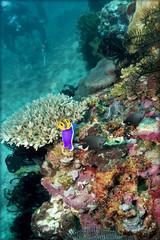 Рифы Миндоро. The reefs of Mindoro