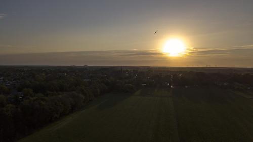 Sundown and bird